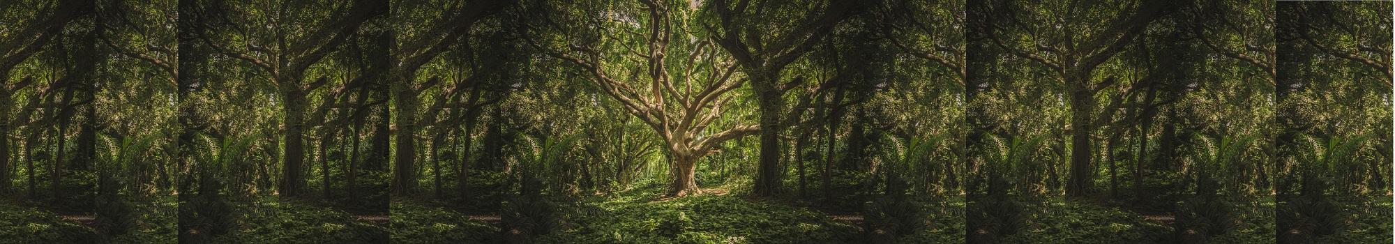 Analogie entre un arbre et une personne douloureuse - ABC Douleur